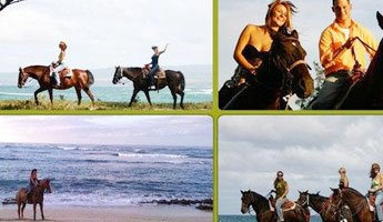 Sunshine Horseback Ride Hawaii Polo Trail Rides