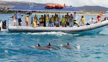 Dolphin Snorkel Morning Tour Ko Olina Ocean Adventures