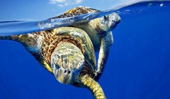 Sea Turtle Snorkel One Ocean Tour Diving