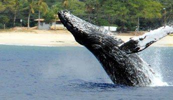 Snorkel & Whale Watching Ko Olina Ocean Adventures
