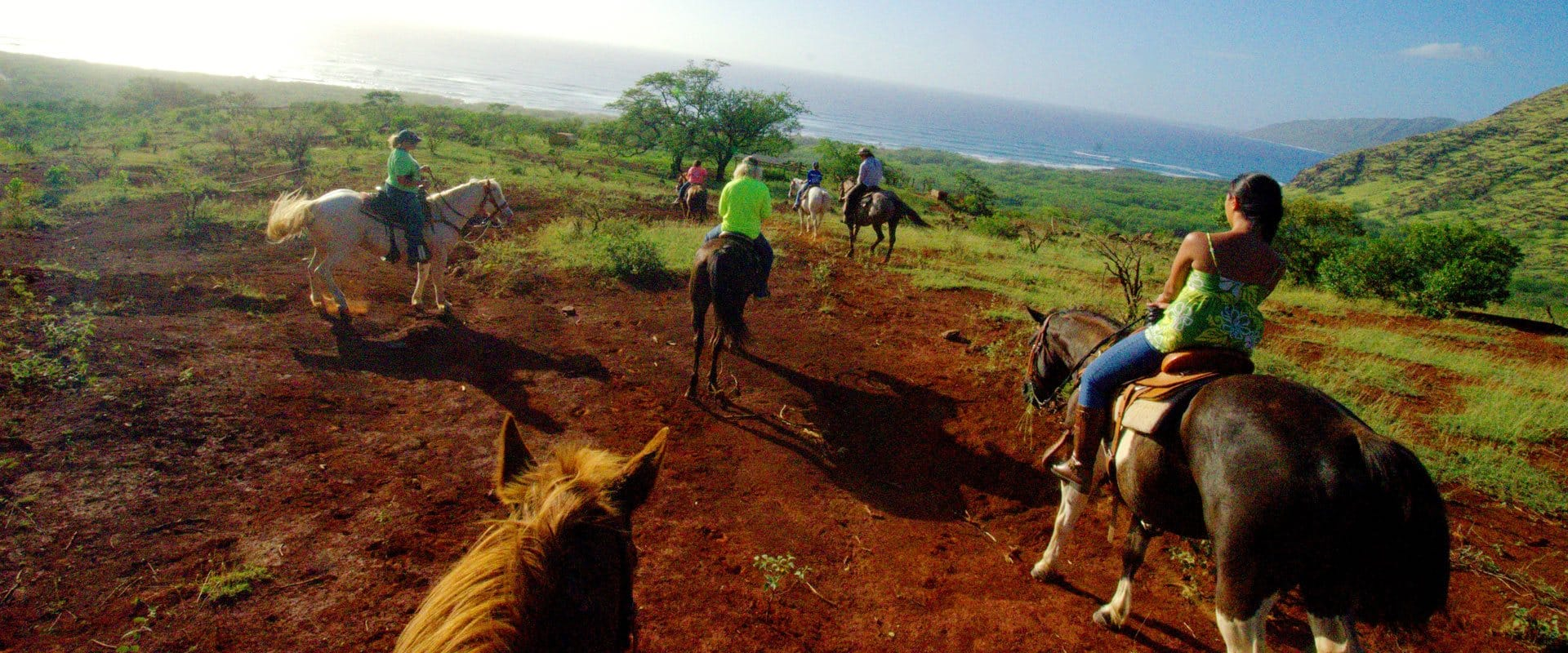 Guided horseback trail ride