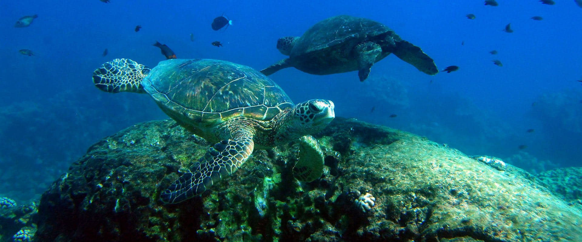 Beauty of sea turtles underwater