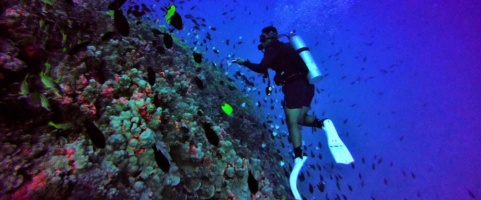 Discover Oahu's Coastal Marine Life Unique to the Hawaiian Islands