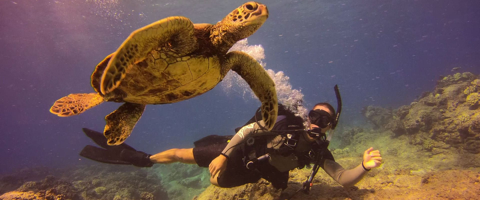 Dive Along Side the Sea Turtles Underwater