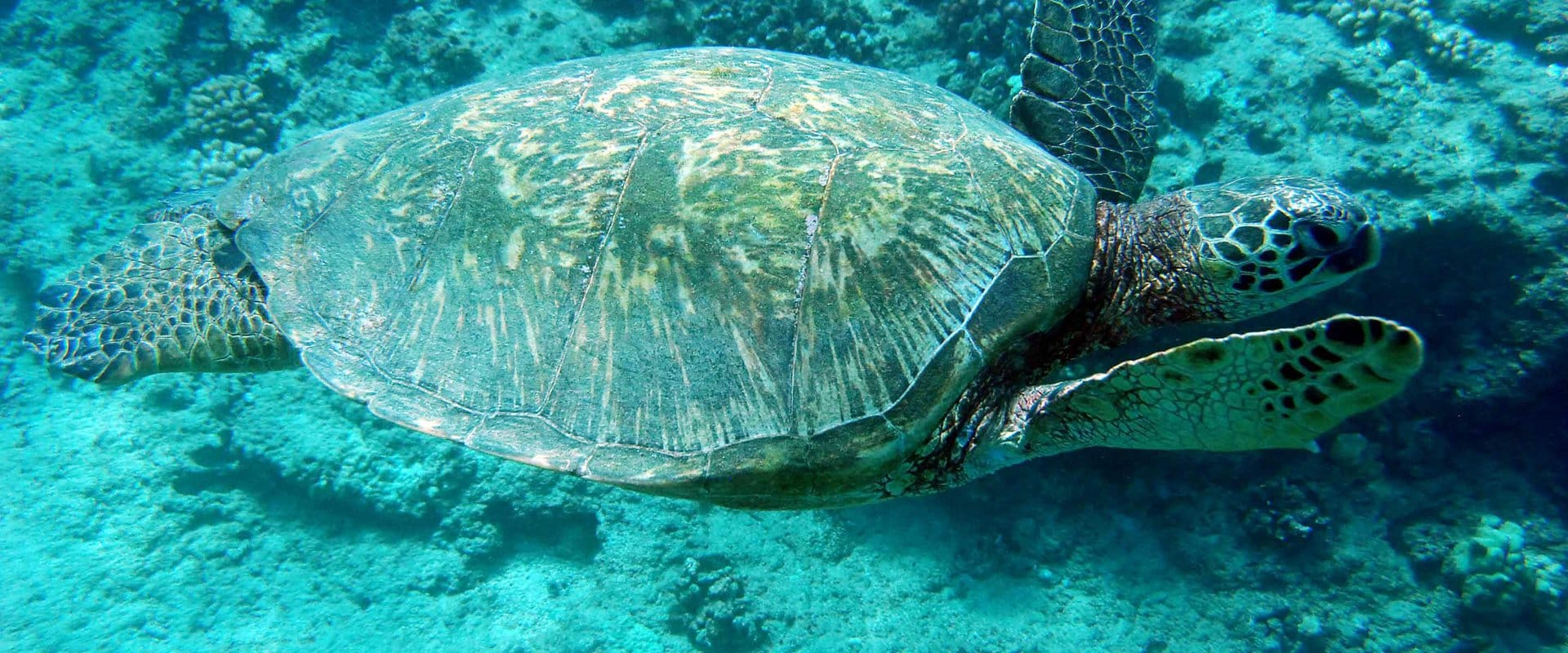 Snorkel Among Reef, Sea Turtles, and Tropical Fish
